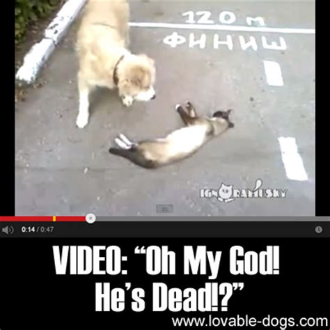 Smith Is Dead Oh My God by Lovable Dogs Quot Oh My God He S Dead Quot Lovable Dogs