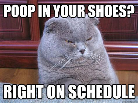 Meme Poop - am your leader cat poop meme memes