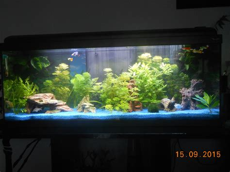 ciano aquarium design zeneo obsession 30l photos d aquarium page 146