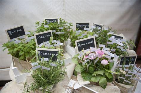 piante aromatiche in giardino come curare le piante aromatiche 10 consigli utili ecoo