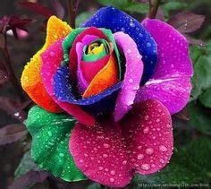 Beautiful Flower Dan Custom Nama welcome to absolutely beautiful flowers rockhton absolutely beautiful flowers