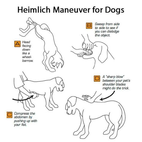 cpr dogs heimlich maneuver for dogs cavalier alliance