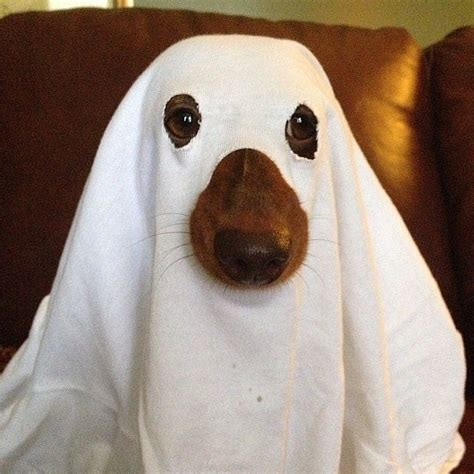 ghost costume for dogs ghost 65 pet costumes to diy on the cheap popsugar smart living