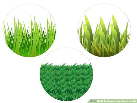 Growing Grass From Seed by 4 Ways To Grow Grass From Seeds Wikihow