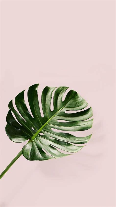 plant background iphone palm leaf pink backround wallpaper