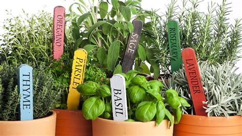 grow  indoor herb garden