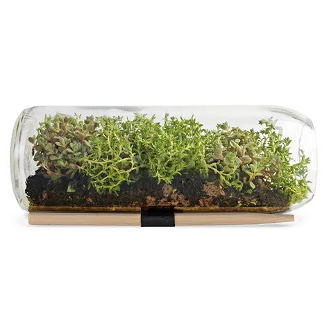 sedum terrarium bottle window garden terrarium supplies uncommongoods