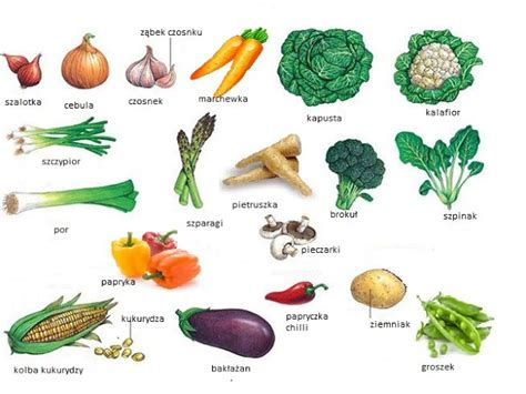 names 0f vegetables warzywa vegetables your