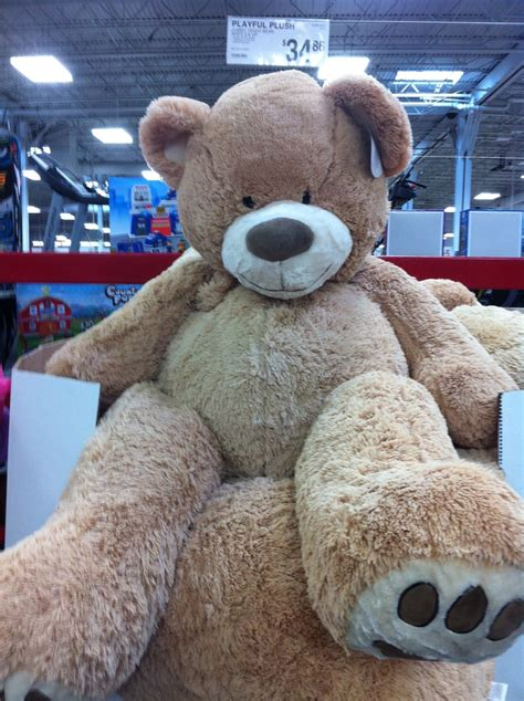 big teddy big teddy want bears teddy bears and