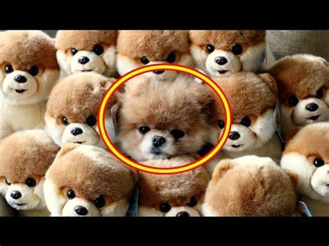 imagenes se animales 15 fotos de animales ocultos a la vista que no encontraras