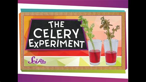 color results the color changing celery experiment