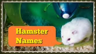cute hamster names for dwarfs females males
