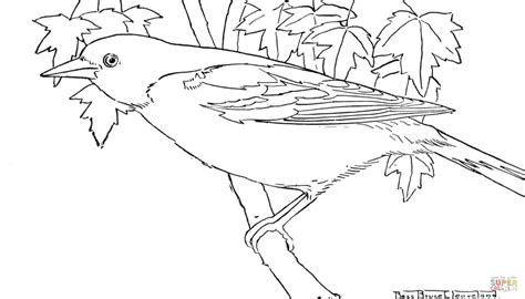 oriole bird coloring page free printable coloring pages