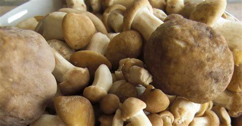 come cucinare i funghi prugnoli duecuoriunacucina prugnoli la loro morte 232 con i