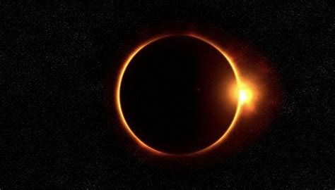 dogs solar eclipse solar eclipse keep your safe proud