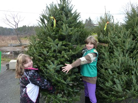 christmas trees kenburn orchards