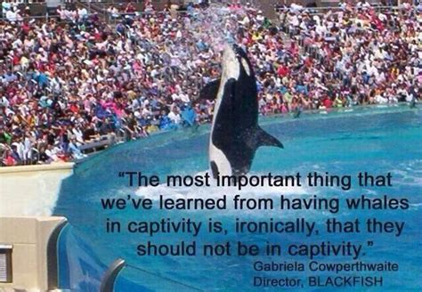 World S Whale Retailer Ends All Whale - 114 best seaworld of hurt images on animal