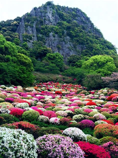 Flower Garden In Japan Japanese Garden In Mifuneyama Saga Japan 御船山 Places Saga Japan And Japanese