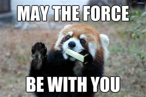 May The Force Be With You Meme by 20 Totally Cool May The Force Be With You Memes