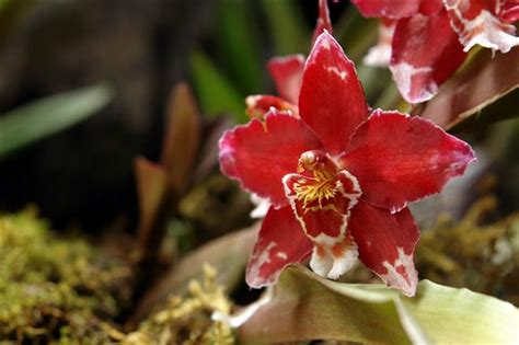 care of orchids after flowering how to take care of orchids after flowering read this to find out