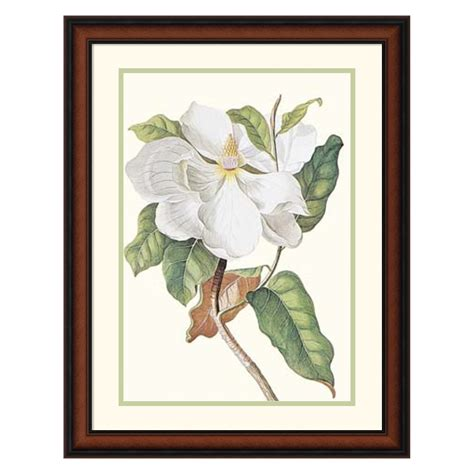 Magnolia Wall Decor by Magnolia Maxime Flore Framed Wall 21 02w X 28 02h In Wall At Hayneedle