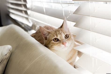 cat friendly decor or how to fool everyone into thinking