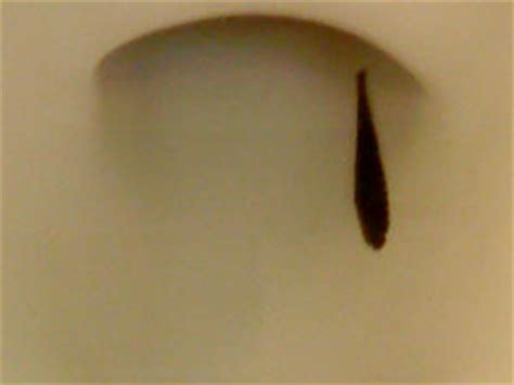 water worms in bathroom faqs on freshwater worms of all sorts identification