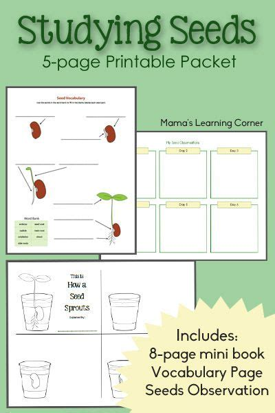 seed observation worksheet studying seeds printable mini book seed chart and