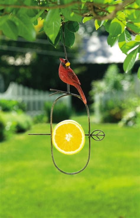 Fruit Feeder For Birds fruit bird feeder gardens ergonomic painting tools in and out cleveland