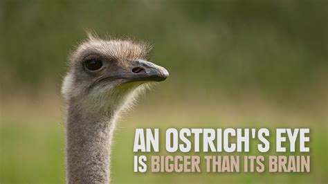 7 Strange And Wonderful Animal Facts by Animals With Amazing Facts Search Animals