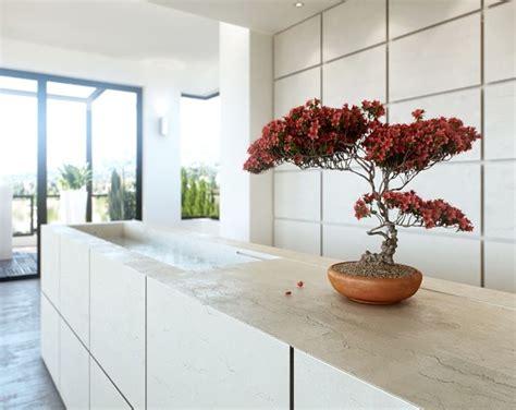 alberi da appartamento alberi da appartamento piante da interno alberi per