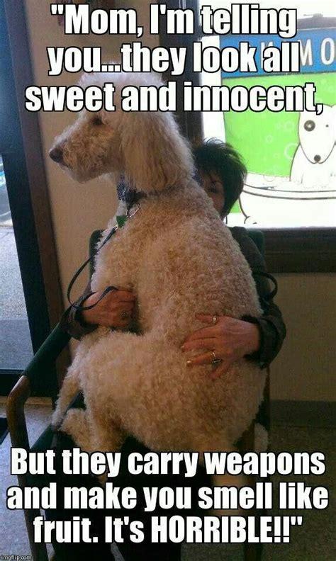 Dog Groomer Meme - 145 best images about groomer humor on pinterest poodle