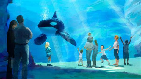 Wallpaper 10m Peta seaworld doubling size of orca tank pledges 10m for