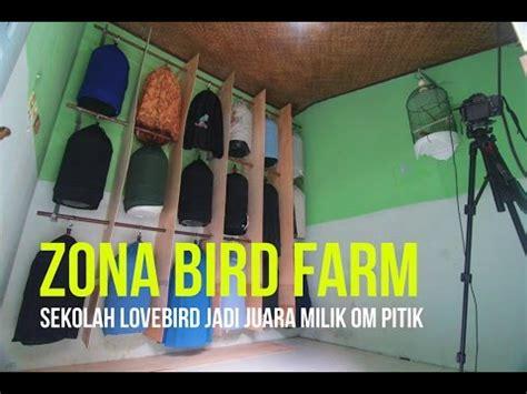 Pakan Opium Lovebird phim clip