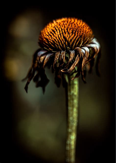 by alan shapiro photographers pinterest floral photography tips make your pictures bloom two