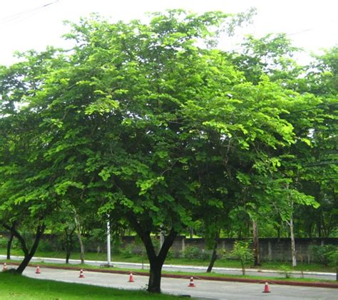 pictures of trees alibangbang