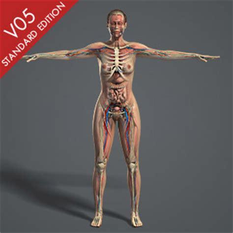 3D-Modell Download der menschlichen Anatomie