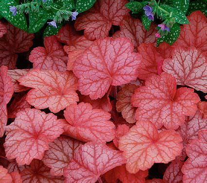 shade loving foliage plants 7 gorgeous shade loving plants the garden glove