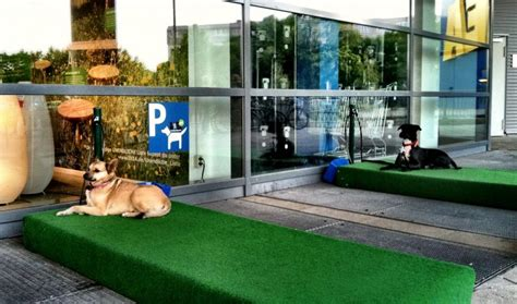 ikea dog parking will ikea dog parking bays take off in the uk pets4homes