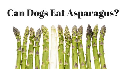 is asparagus for dogs is asparagus safe for dogs smart owners