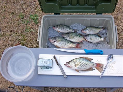 fillet a crappie how to filet a crappie fish