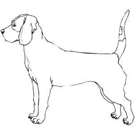 coloring pages of bloodhounds bloodhound coloring page