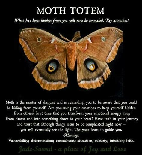 moths in house meaning the 25 best moth meaning ideas on pinterest meaning of moth moths in house and