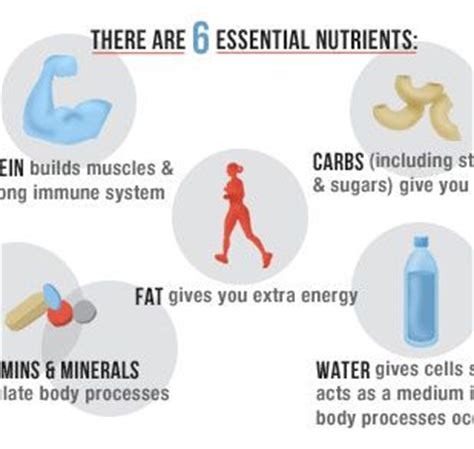 carbohydrates proteins fats and water are essential there are 6 essential nutrients in a healthy diet protein