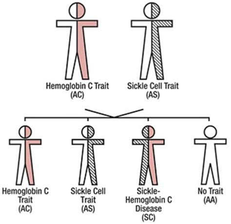 Sc Bezita Cell hemoglobin c diease and trait laboratory diagnosis