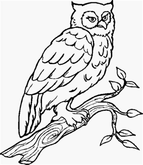 owl coloring pages images owl coloring pages all about owl
