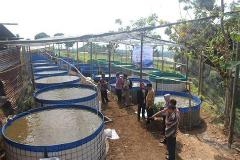 Jual Kolam Terpal Karet jual kolam terpal karet untuk budidaya lele dunia terpal