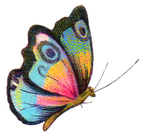 royalty free clipart images royalty free image colorful butterfly