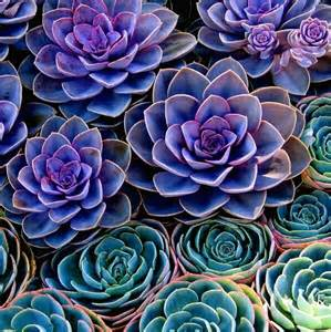 colorful succulents beautiful colorful succulents the big day
