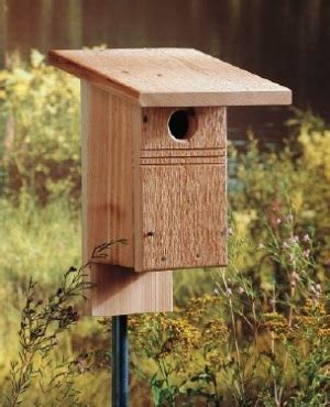 where to place bluebird house bluebird house eastern bluebird houses at the backyard bird company bird house plans